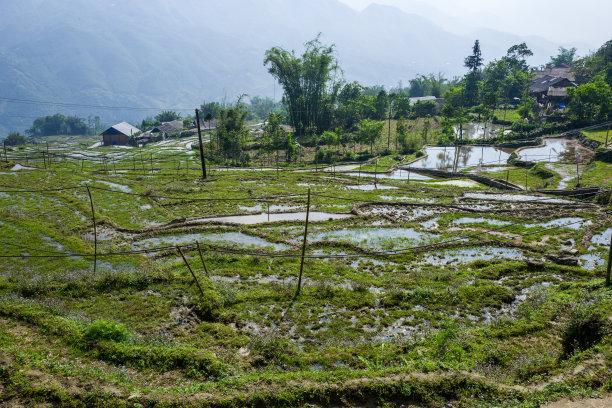 越南米图片
