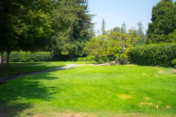 园林,风景,草坪