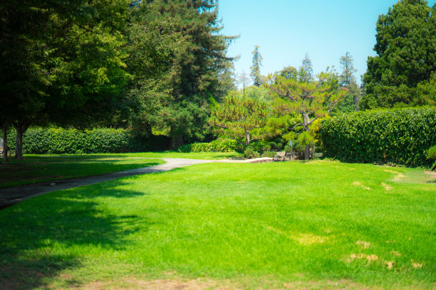 公园,风景,草坪