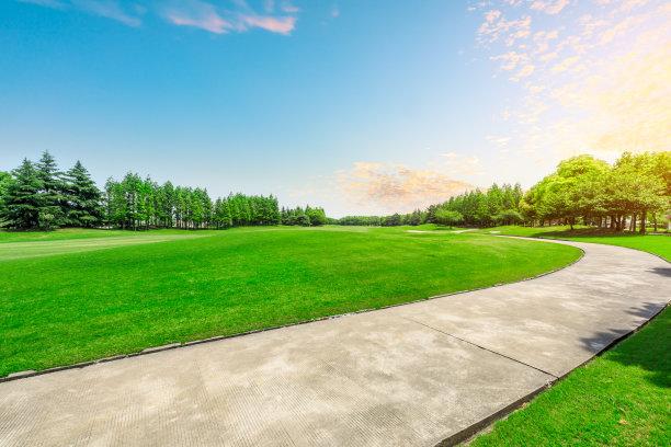 草地,森林,公园