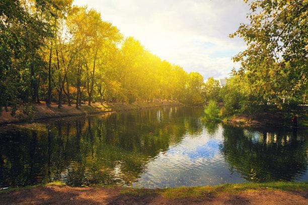 池塘,鸟类,秋天