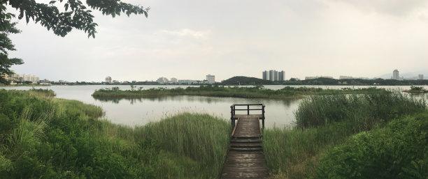 韩国,湖,芦苇