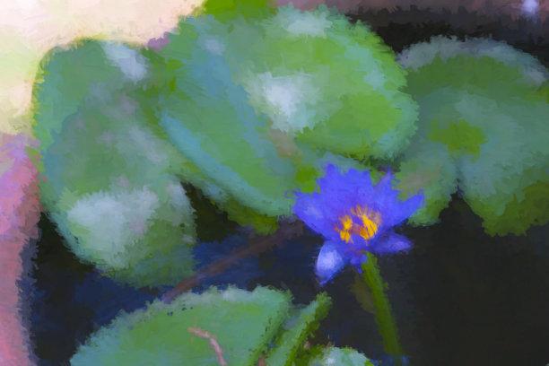 紫色水花盆