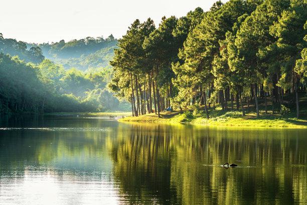 松树,湖,泰国