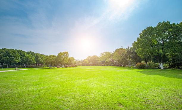 公园,树林,绿色