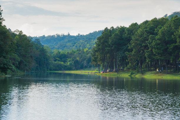水库,森林,山