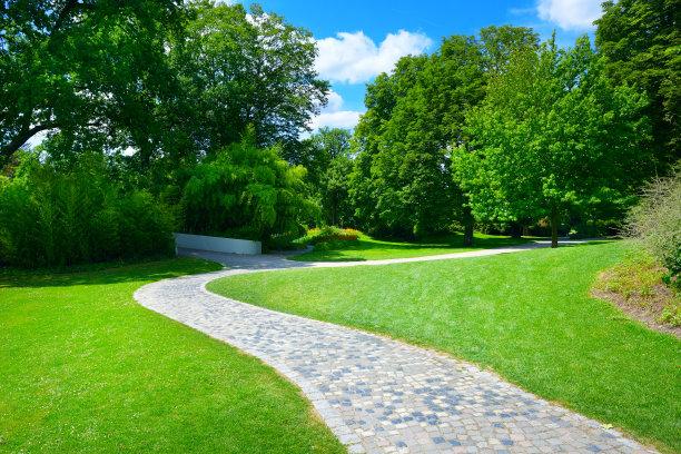 小路,草地,自然美