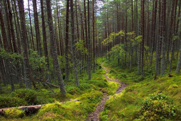 英国甘比亚树林