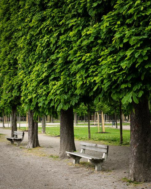 公园林荫路维也纳