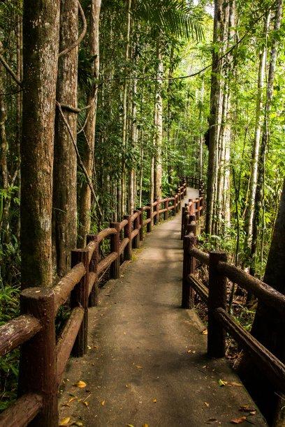 泰国国家公园小路