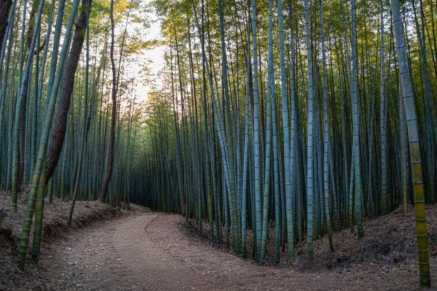 竹林自然美活力