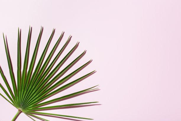 概念棕榈叶背景