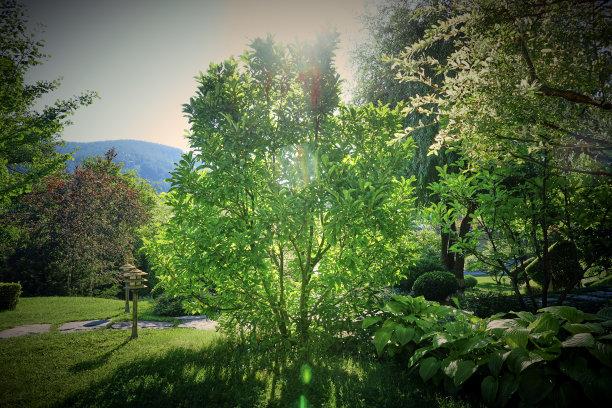 园林小路绿色