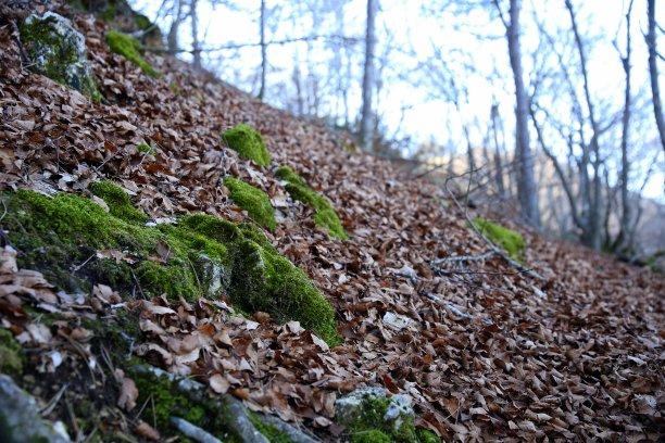 林区秋天山毛榉树