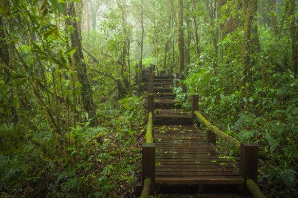 林中小路自然风景