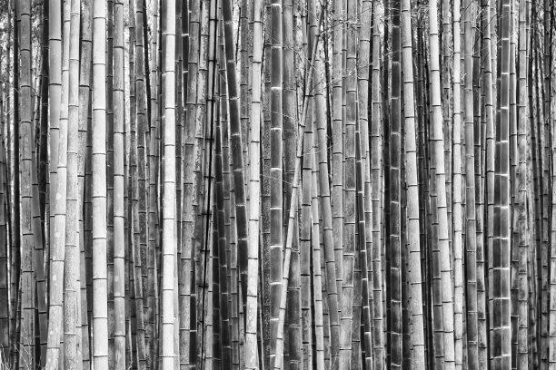 拥挤的竹黑色