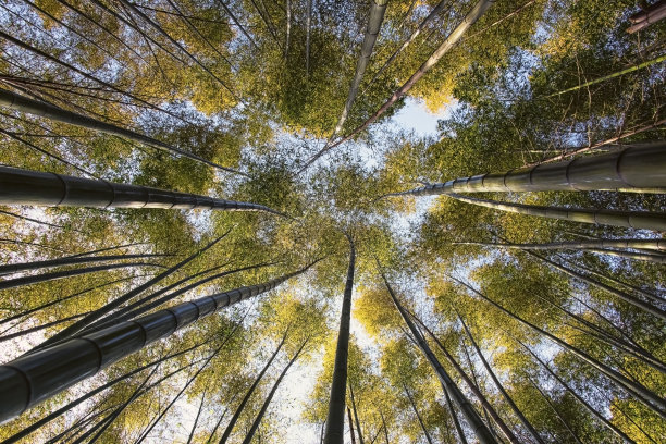 竹林日本人类居住地