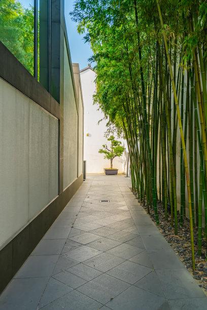 小路竹林环境