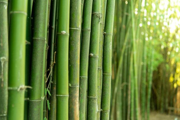 绿色竹子公园