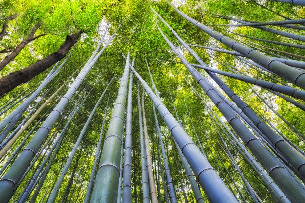 竹抽陀螺倾斜视角