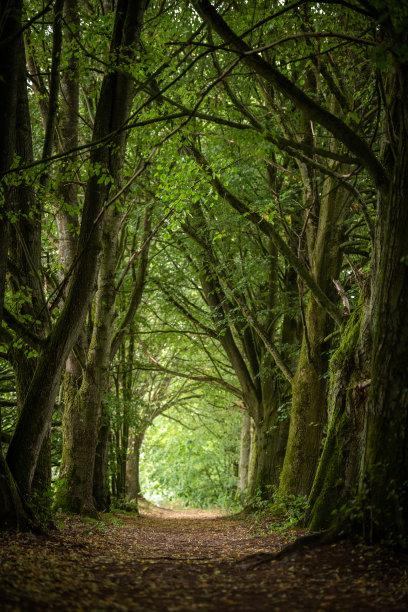 童话故事小路落叶树