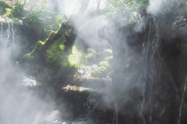 树林自然风景