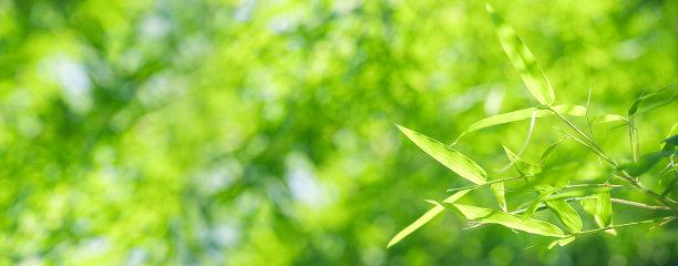 笋叶子泰国