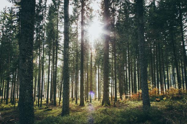 日光森林环境