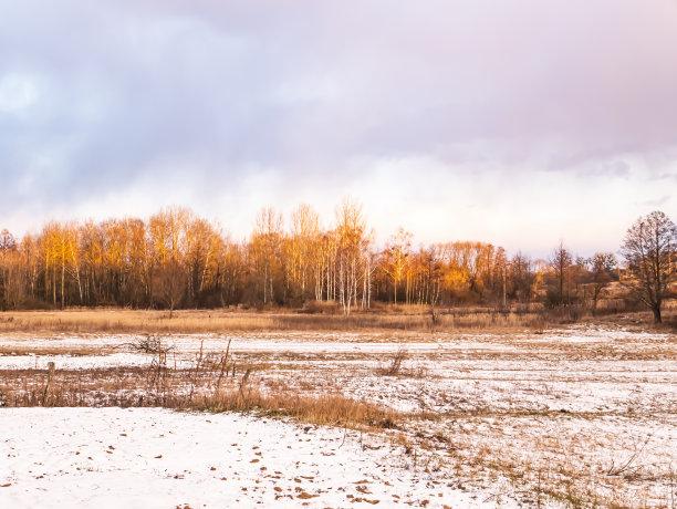 草地冬天雪