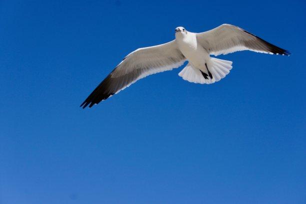 一个人海鸥图片