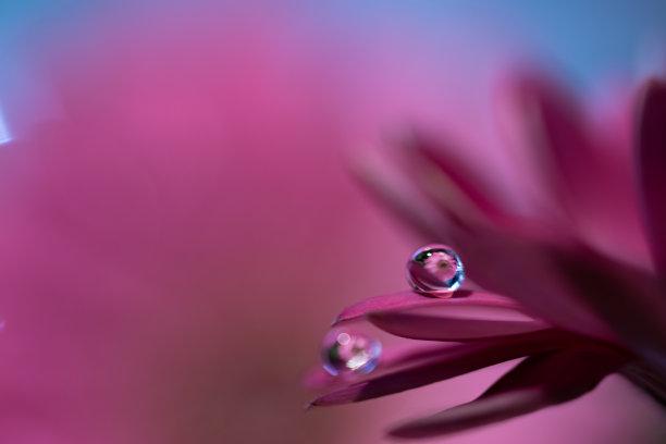 紫色水滴图片
