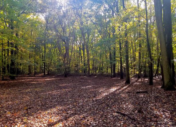 秋天田地森林