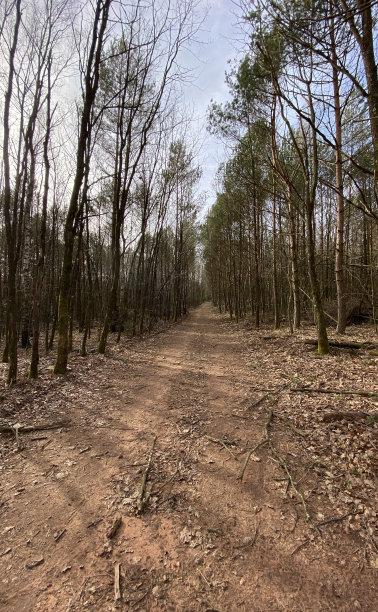 秋天地形森林