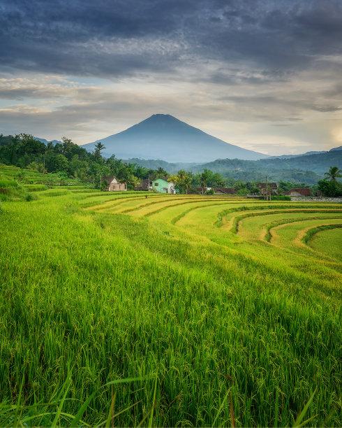 稻田地环境