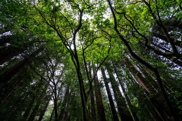 茂盛的树林