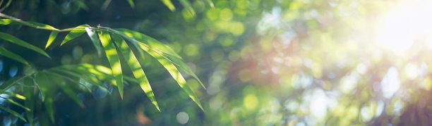 笋叶子边框