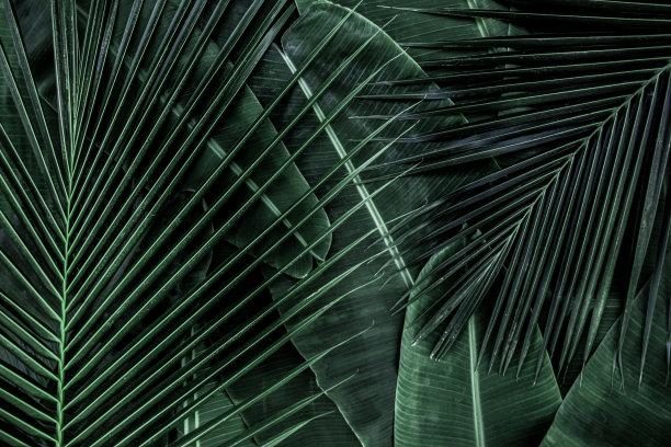 椰子叶子香蕉叶