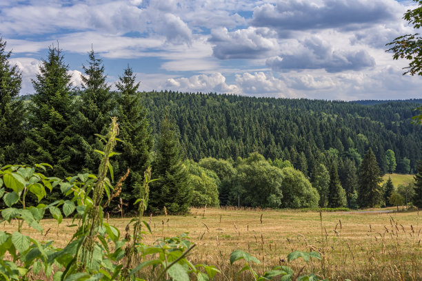 松树种植园地形