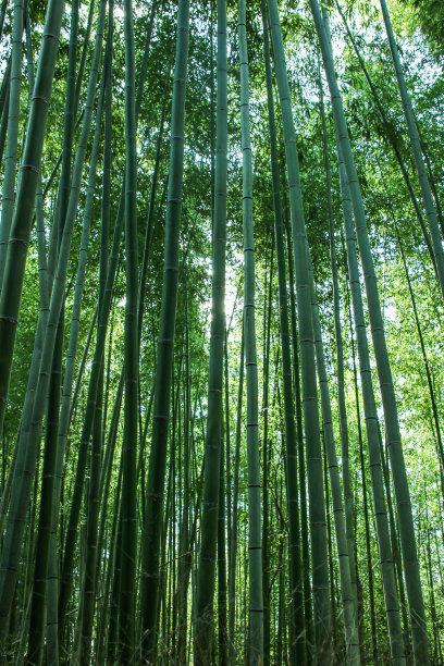 竹林热带气候环境