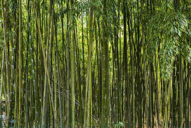 竹林彩色背景环境