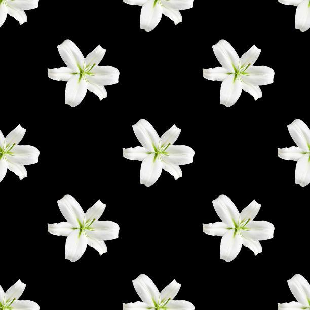 装饰品白色百合花