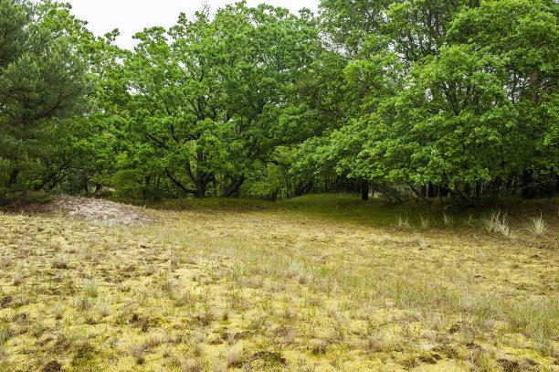 自然美灌木丛地衣