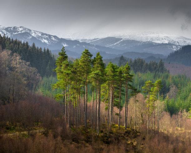 松树森林苏格兰湖
