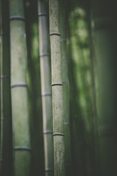 纹理效果背景竹