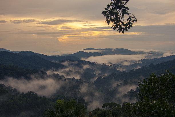 热带雨林日落