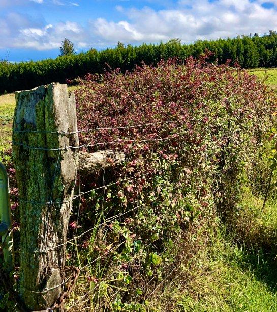 木桩野花篱笆