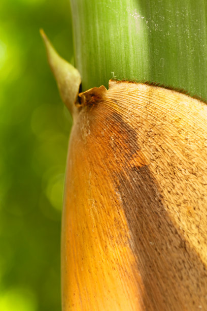 笋森林秧苗