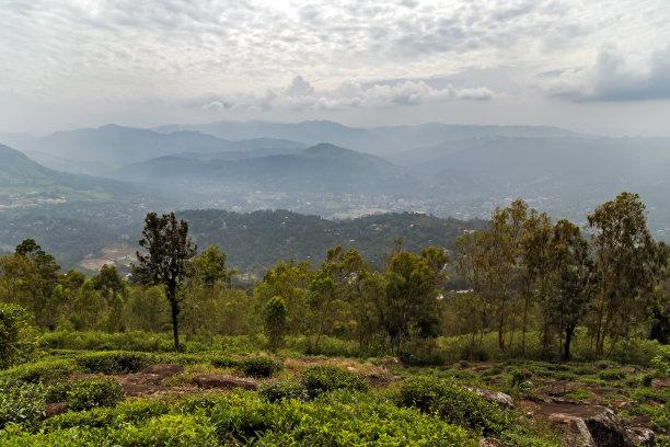 茶树农业斯里兰卡