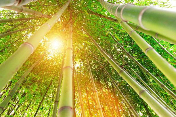 正下方视角竹绿色