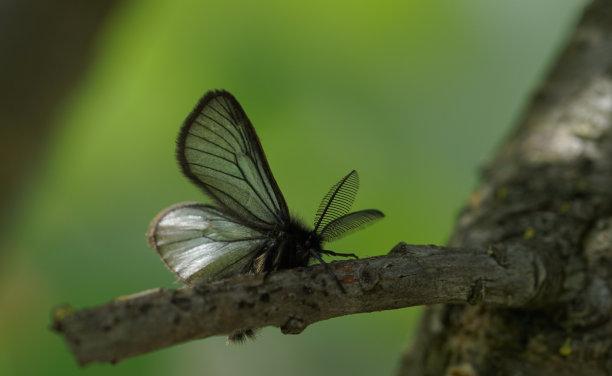 特写蝴蝶图片